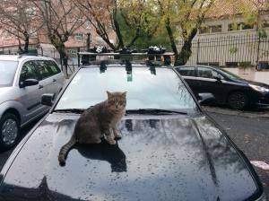 """Repare no petróleo"", orienta o gato."