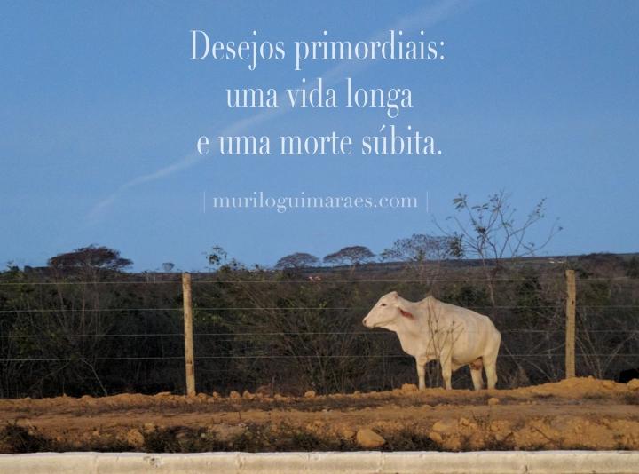 vida_longa